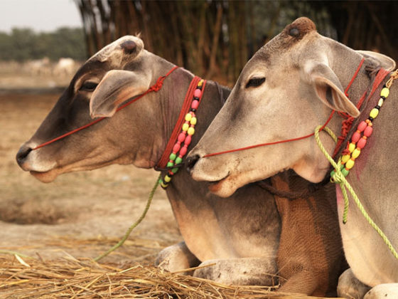 Family of Indian man killed by mob accused of cow slaughter